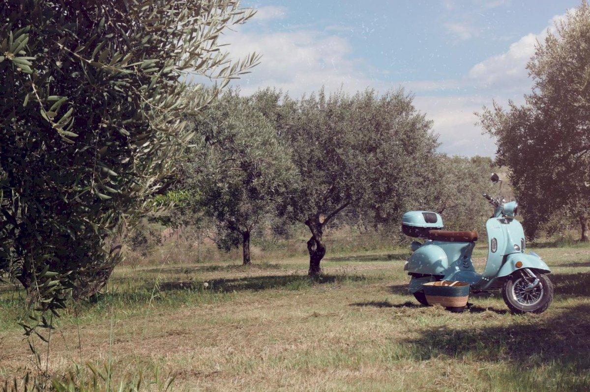 Visite des vignobles en Vespa électrique